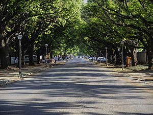Potchefstroom - Oak Avenue, one of many oak-lined streets near the university in Potchefstroom