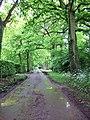 Oak avenue - geograph.org.uk - 174926.jpg