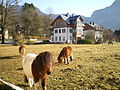 Obertraun Ponys Herbst.JPG