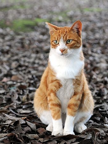 Orange and white tabby cat sitting on fallen l...