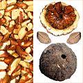 Owoce Orzech brazylijski.jpg