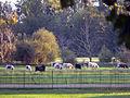 Oxford - Christ Church Meadows 12.JPG