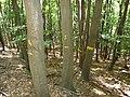 Označené stromy, Ondřejovsko.jpg