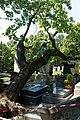 Père-Lachaise - Division 4 - arbre déraciné 03.jpg