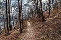 Pörtschach Leonstein Gloriettenweg Buchenwald 29032020 8595.jpg