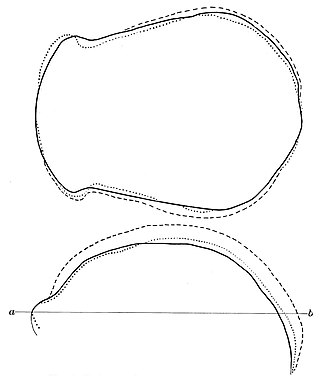PSM V44 D636 Superimposed drawings of skull outlines.jpg
