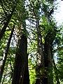 Pacific Rim National Park - Rainforest Trail (3670683543).jpg