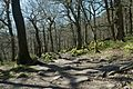 Padley gorge trees.jpg