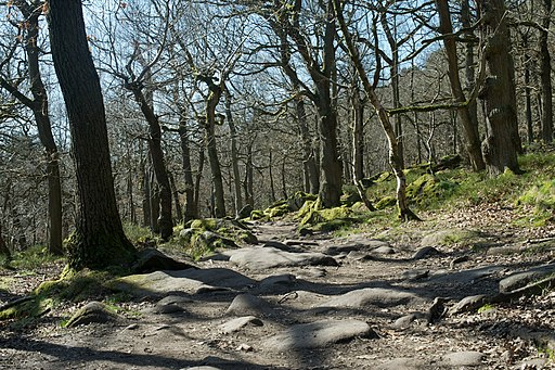 Padley gorge trees