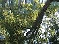 Palanga Botanical Park. Reflections. 2018(5).jpg