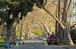 Palo Altoko kale bat.jpg