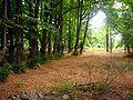 Park Dranske-Lancken - Park 3.jpg