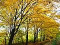 Park views in autumn (Netherlands 2011) (6311928862).jpg