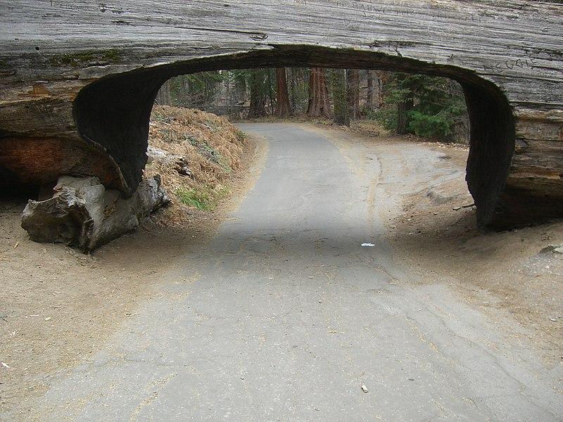 Parque Nacional Sequoia3558.JPG