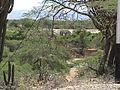 Parque nacional Cerro Saroche 1999 002.jpg