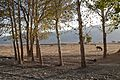 Pastorale, Firuzabad (14288455240).jpg
