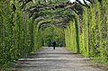 Path at gardens of Schönbrunn.jpg