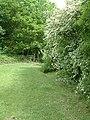 Path to Hood Wood - geograph.org.uk - 180445.jpg