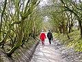 Path to the Kingfisher Hide at Slimbridge - geograph.org.uk - 1732788.jpg