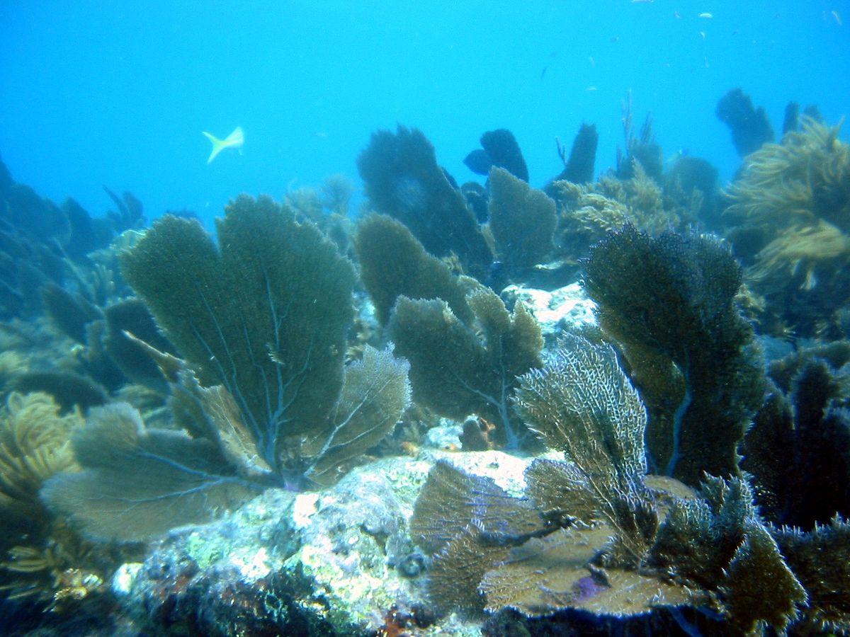 Hotel Coral Blue Beach Playa Del Carmen