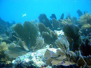 John Pennekamp Coral Reef State Park - Image: Pennekamp Coral