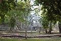 Petén Campechano, Calakmul, Campeche (22012549059).jpg