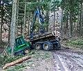 Pfälzerwald Holzernte IMG 0368.jpg