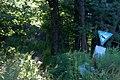 Pfad in den Wald, Hebelhof, Feldberg - geo.hlipp.de - 23531.jpg