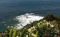 Piante e fiori selvatici sulla scogliera di Calafuria