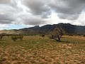 Picacho Mountains - panoramio.jpg