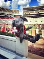 Picture of Big Al at Bryant Denny Stadium 2013-09-13 18-34.jpg