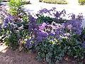 PikiWiki Israel 42610 flowers.jpg