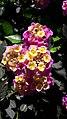PikiWiki Israel 47975 flower.jpg
