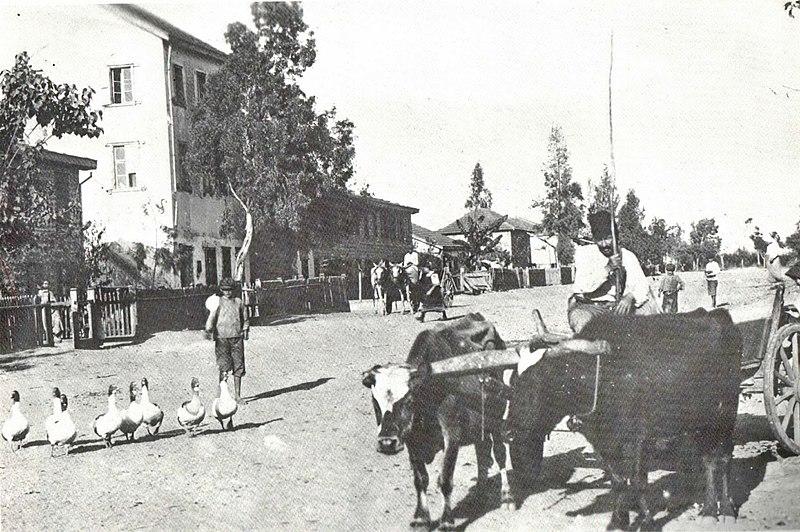 הרחוב הראשי בעקרון