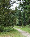 Pinetum Birkhoven 1.jpg