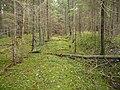 Pirmojo pasaulinio karo siauruko pylimo fragmentas Kalviasalyje Ignalinos raj.jpg