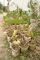 Plants in Banani.jpg
