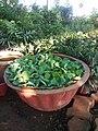 Plants in Nursery Pune.jpg