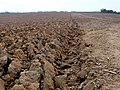 Ploughed Field near Eggardon Hill - geograph.org.uk - 1259768.jpg
