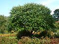 Poltava Botanical garden (24).jpg