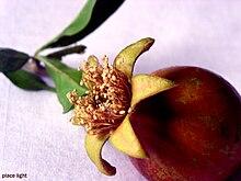 Pomegranate Flower.jpg