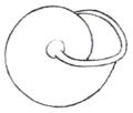 Pommerhelix monacha shell 3.png