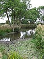 Pond - geograph.org.uk - 1490639.jpg
