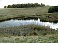 Pond - geograph.org.uk - 325286.jpg