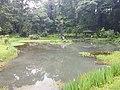 Pond View 20170706 160353.jpg
