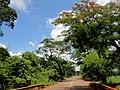 Ponte do Rio Pardo no Km-126 da rodovia Dona Genoveva Lima de Carvalho Dias - SP-373, que liga as cidades de Morro Agudo e Jaborandi. - panoramio (7).jpg