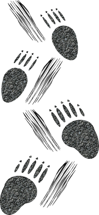 Illustration of Porcupine tracks Porcupine tracks.png