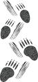 Porcupine tracks.png