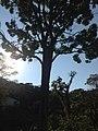 Posse, Teresópolis - RJ, Brazil - panoramio (33).jpg