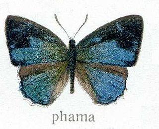 Poritiinae